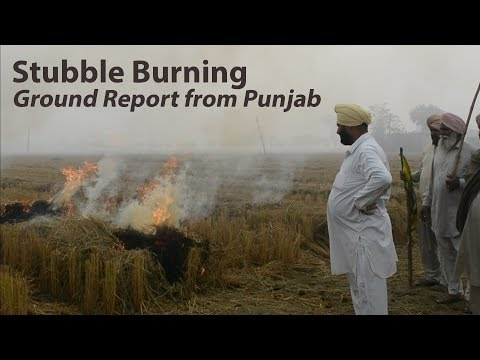 Ground Report: Why Farmers Are Burning Stubble In Punjab