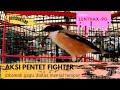 Aksi Pentet Fighter Diatas Gantangan  Mp3 - Mp4 Download