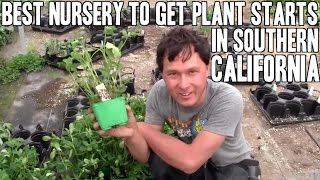 Best Nursery to get Plant Starts for Los Angeles Gardening