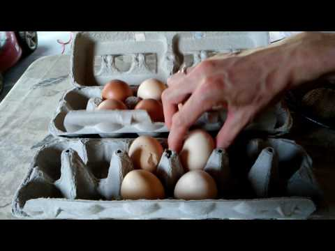 What to do with cracked chicken eggs? Sustainable organic food farming and homesteading.
