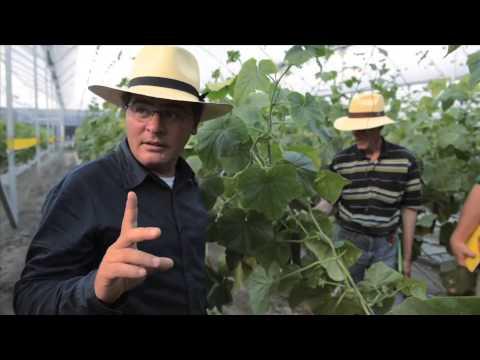 Tomates Y Pepinos Orgánicos En Invernadero