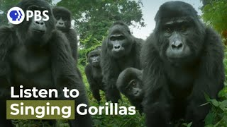 Did You Know Gorillas Can Sing?