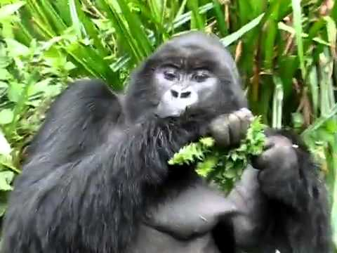 how to eat a banana like a gorilla