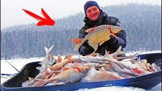Они РВУТ ЛЕСКУ и РАЗГИБАЮТ КРЮЧКИ ! Зимняя рыбалка в на безмотылку (чёртик) Косим леща СИБИРИЯ