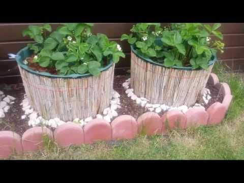 Наш сад. Огород.помидоры.