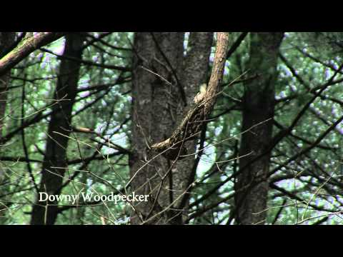 Christmas Bird Count at Brown County State Park | Indiana DNR