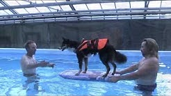 Surfkurs der Hundeschule Fürth im Frühjahr 2013
