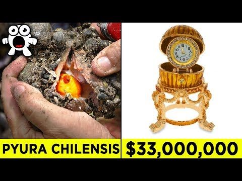 Top 10 Luckiest Discoveries That Made People Rich