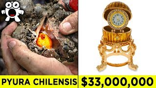 Top 10 Luckiest Discoveries That Made People Rich 2017 Video