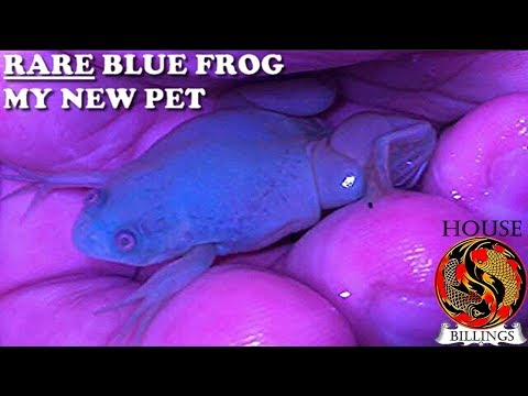 RARE blue FROG *MY NEW PET