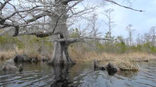 Alligator River Kayaking
