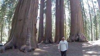 secuoyas gigantes california