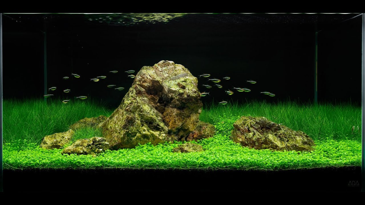 Awesome Aquascape Underwater Landscapes