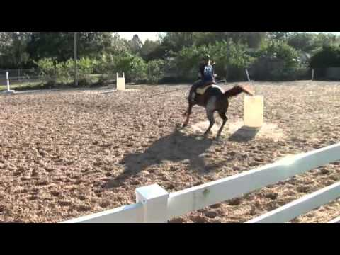 Stopping The Barrel Racing Horse