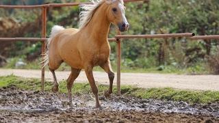 Học động vật | Bé tập tiếng kêu và nói tên con ngựa con ong con chó  | Dạy trẻ thông minh sớm