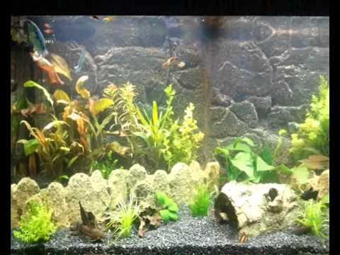 мой аквариум и его обитатели