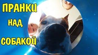 Пранки над собакой Реакция моей собаки СОБАКА В ШОКЕ