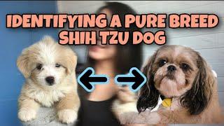IDENTIFYING A PURE BREED SHIH TZU DOG/DIFFERENCE MIXBREED AND PURE BREED SHIH TZU