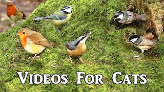 Sounds for Cats : Awesome Videos for Cats to Watch -  Birds in The Secret Forest