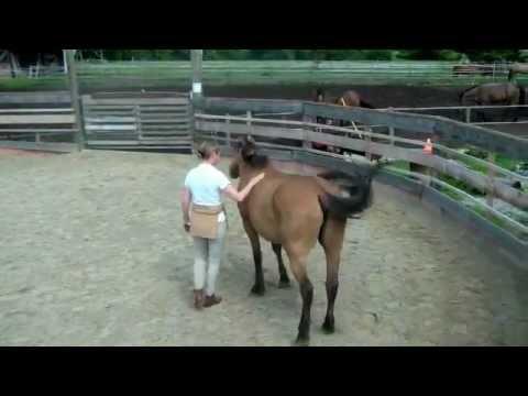 Gabriela Langen - Pferdebehandlung. Himmelsaugen.de