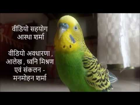 Love Bird  { बजरी तोता  } Reading Newspaper  { Funny