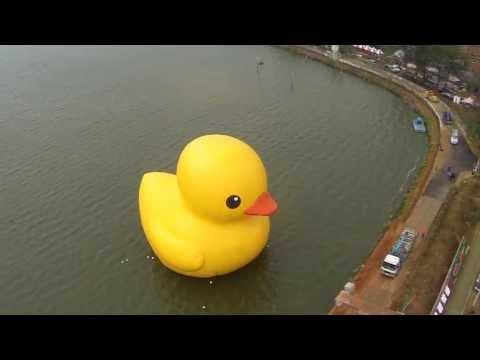 2013桃園地景廣場藝術節: 空拍黃色小鴨初亮相