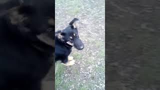 Правильное питание для собак 1 часть