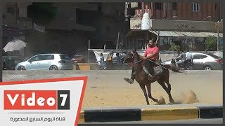 حصان عربى يبرز مهاراته وسط الميدان وأمام المارة.. شاهد ماذا فعل؟
