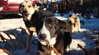 """Отвезли 65 кг. корма!!! Приют для бездомных собак """"doghope"""""""