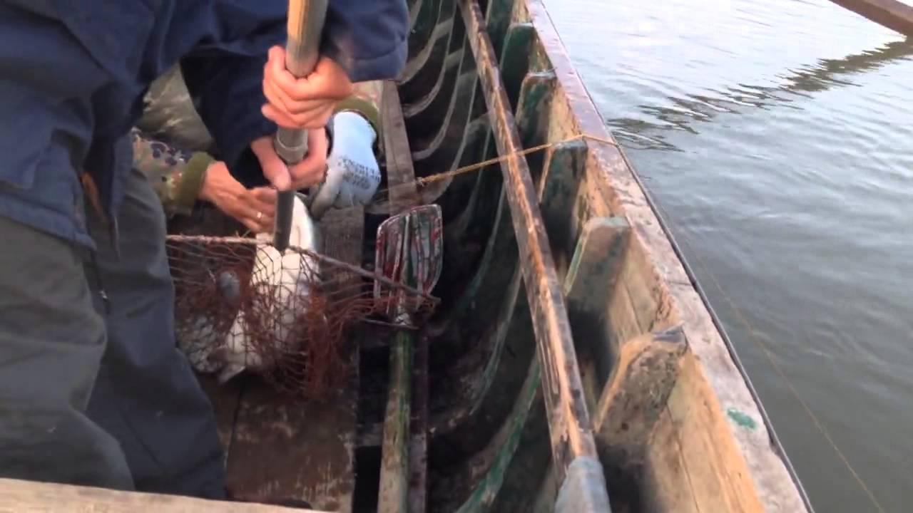 рыбалка на сома перемётами на вьюна в Вилково(часть процесса)