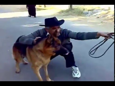 Accuracy training by Pakistan dog trainer