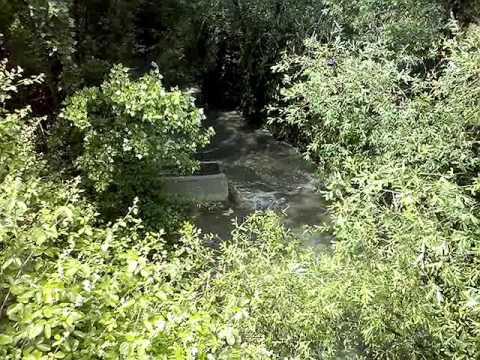 Vertidos de Aguas Fecales en el Arroyo de la Poveda en Collado Villalba (I)