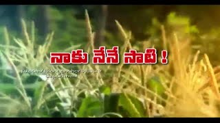 Maize Cultivation - Telangana State Horticulture Department - Part - 1