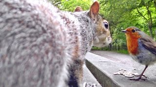 Videos For Cats To Watch - Squirrels, Robin and Great Tit Birds