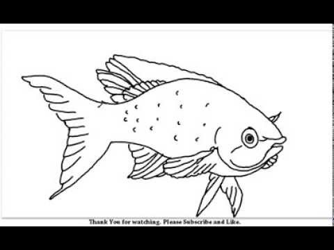 how to draw a beautiful fish