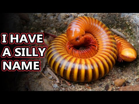 Millipede Facts: They Don't Bite! | Animal Fact Files