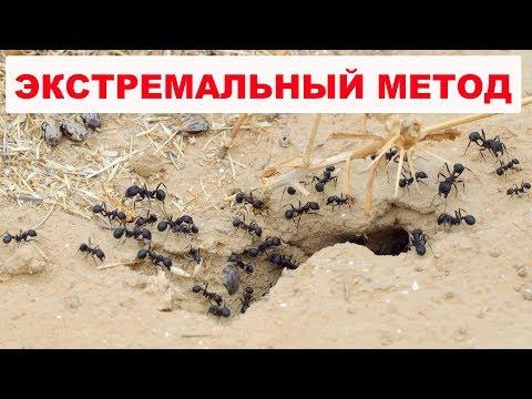 Как избавиться от муравейника