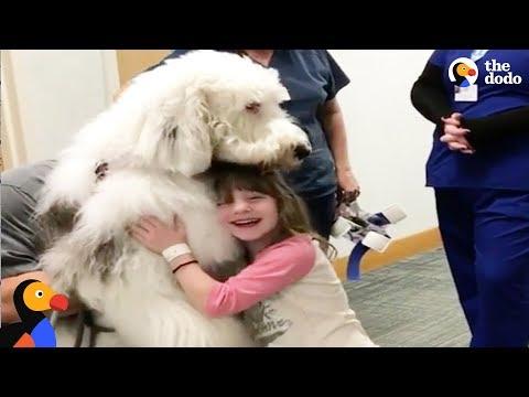 Huge Dog Helps Sick Kids Feel Better | The Dodo