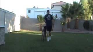 Dog Training - Working K-9