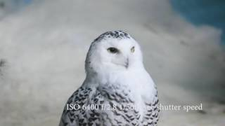 Nikon D500 Ultra High Definition Video ISO Performance Test