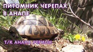 Питомник средиземноморских черепах в Анапе