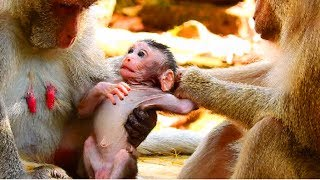 Monkey attack girl