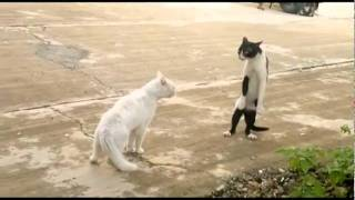 The Legend of Cobra Cat! - Funny cats fighting cobra style