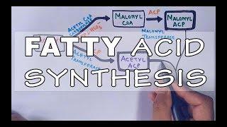 Fatty Acid Biosynthesis | Part II