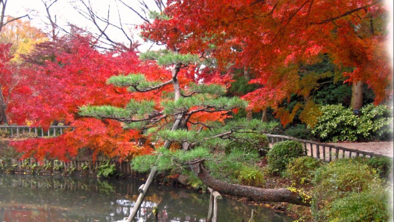 東山植物園の紅葉 2011.12.01 - YouTube