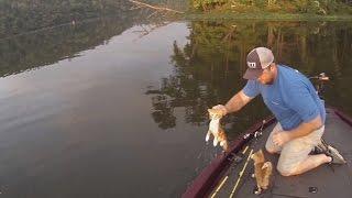 Kittens Swim Across River to Fishermens Boat