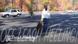 Amazing Off Leash K9 Training New Jersey