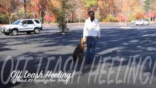Amazing Off Leash K9 Training New Jersey
