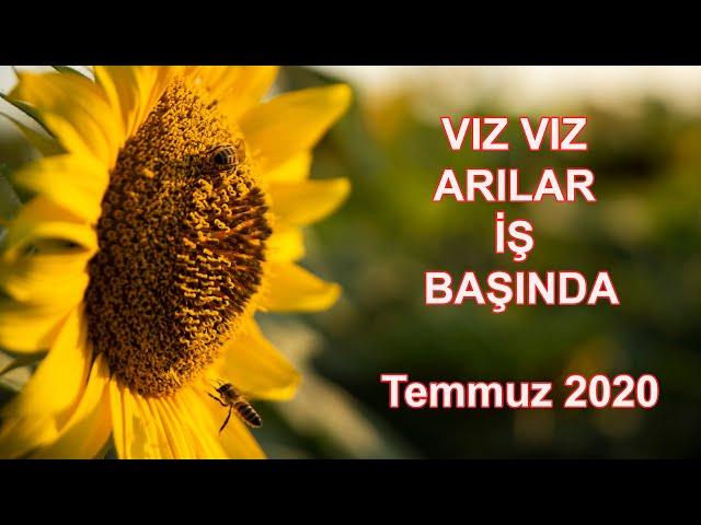 Arılar - Temmuz 2020 - Tekirdağ / Bees - July 2020 - Turkey