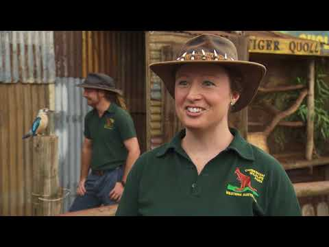 Destination WA - Barking Owls & reptiles: Caversham Wildlife Park